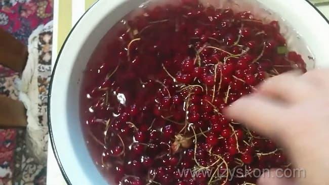 Для приготовления морса из красной смородины по рецепту, помойте ягоду.