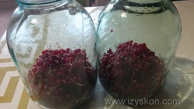 Для приготовления морса из красной смородины по рецепту, положите ягоды в банку.