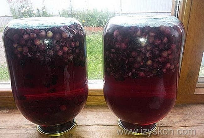 простой рецепт приготовления компота из черемухи на зиму